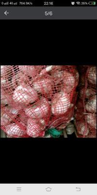这是一张关于金杞牌大蒜 5~5.5cm 多瓣蒜的产品图片