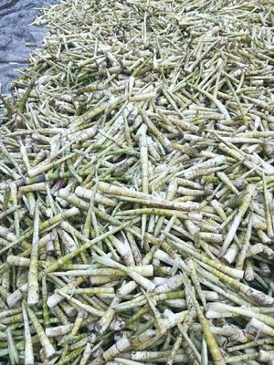 这是一张关于方竹笋 21~25cm 鲜笋的产品图片