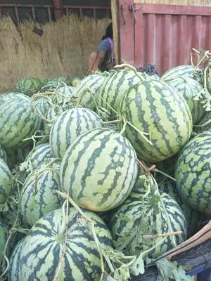 河南省开封市通许县8424西瓜 有籽 1茬 7成熟 6斤打底