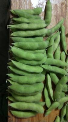 江苏省徐州市铜山区绿宝石毛豆 18~24克