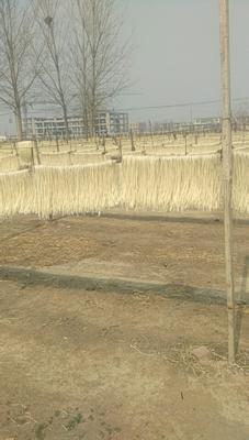 河北省邢台市南和县木薯粉