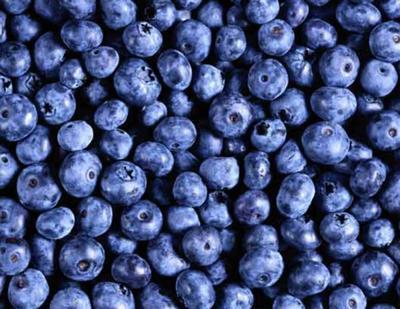 这是一张关于北陆蓝莓 鲜果 4 - 6mm以上的产品图片