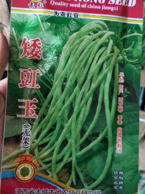 江苏省宿迁市沭阳县豆角种子 ≥95%
