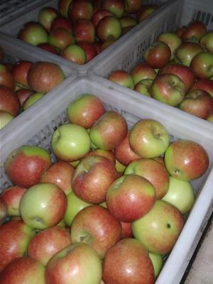 这是一张关于美八苹果 光果 片红 65mm以上的产品图片