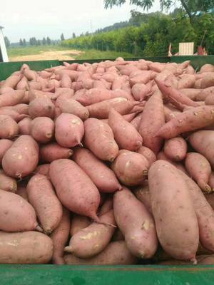 这是一张关于龙九红薯 3两以上的产品图片