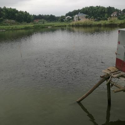 这是一张关于水库草鱼 人工养殖 3.5龙8国际官网官方网站的产品图片