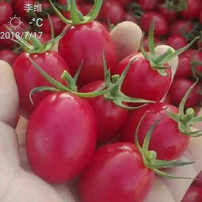 海南省陵水黎族自治县陵水黎族自治县千禧圣女果