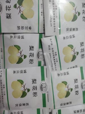 河北省石家庄市赵县梨花粉