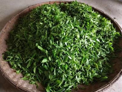 广东省深圳市宝安区安化黑茶 盒装 特级