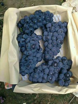 这是一张关于京亚葡萄 5%以下 1次果 2斤以上的产品图片