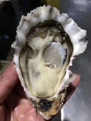 山东省威海市乳山市乳山牡蛎 人工殖养 1-3只/公斤