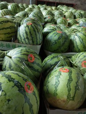 这是一张关于8424西瓜 有籽 2茬 9成熟 6斤打底的产品图片