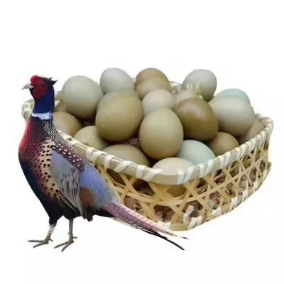 江西省赣州市南康区七彩山鸡 2-3斤