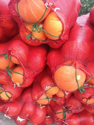 新疆维吾尔自治区阿克苏地区阿克苏市金瓜 2~4斤 扁圆形