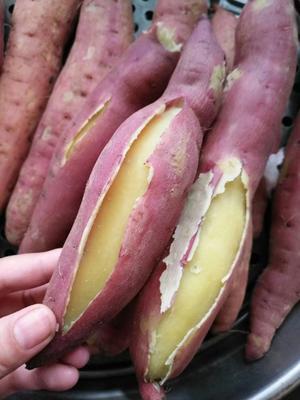 陕西省西安市阎良区板栗薯 红皮 3两以上