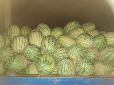 这是一张关于绿宝西瓜 有籽 1茬 10成熟 10斤打底的产品图片