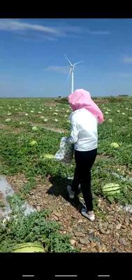 这是一张关于宁夏西瓜 有籽 1茬 8成熟 10斤打底 的产品图片