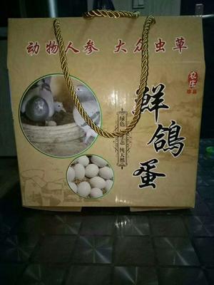 山东省德州市庆云县肉鸽蛋 食用 礼盒装