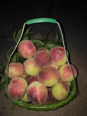 贵州省黔南布依族苗族自治州瓮安县苹果桃 65mm以上 4-5两