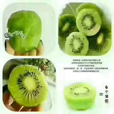 湖南省湘西土家族苗族自治州永顺县绿心猕猴桃 100~120克