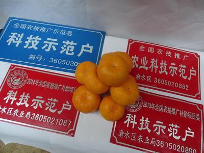 这是一张关于新余蜜桔 4.5 - 5cm 1.5 - 2两的产品图片