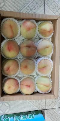江苏省无锡市滨湖区阳山水蜜桃 70mm以上 5.0两