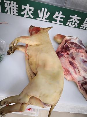贵州省黔南布依族苗族自治州贵定县香猪肉 生肉