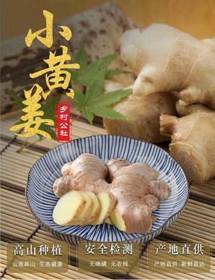 云南省红河哈尼族彝族自治州红河县小黄姜 带土 4两以上