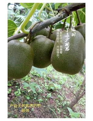 这是一张关于红心猕猴桃 50克以上的产品图片