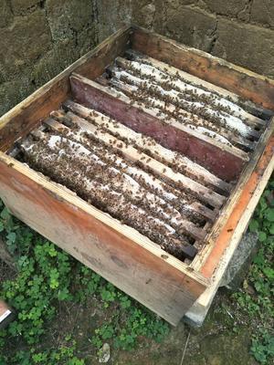 这是一张关于土蜂蜜 散装 98% 2年以上的产品图片