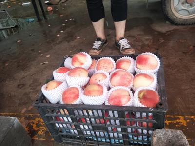 北京平谷区水蜜桃 55mm以上 3 - 4两