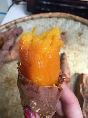山东省德州市夏津县烟薯25 红皮 3两以上