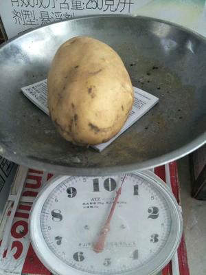 河北省承德市围场满族蒙古族自治县围场马铃薯 3两以上