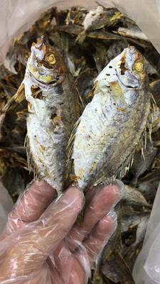 广东省潮州市饶平县泥猛鱼 野生 0.5公斤以下