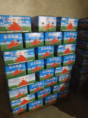 山东省青岛市莱西市三红胡萝卜 15cm以上 4两以上 4~5cm