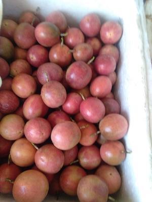 这是一张关于台农一号百香果 50 - 60克的产品图片