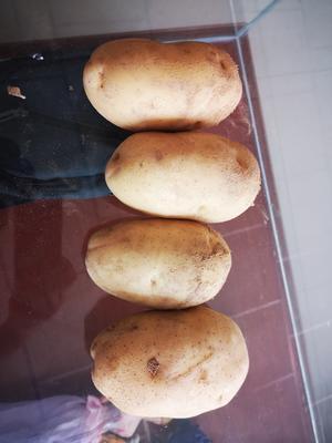 这是一张关于冀张226土豆 2两以上的产品图片