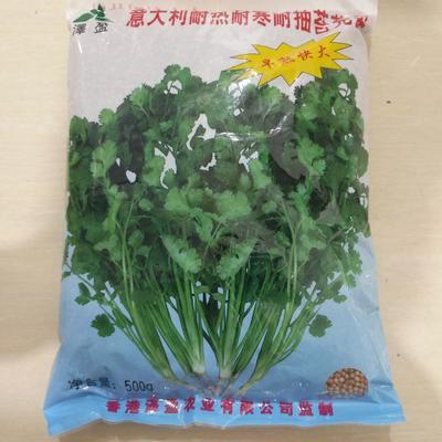 山东省临沂市兰山区香菜种子