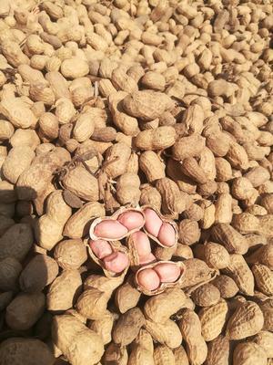 安徽省六安市裕安区白沙系列 袋装 12-18个月