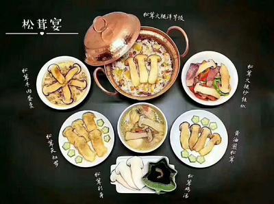 这是一张关于香格里拉松茸 野生 9cm-12cm 半开伞 鲜货的产品图片