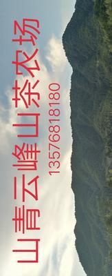 江西省吉安市遂川县野生山茶油