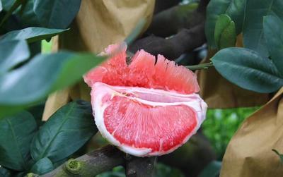 广西壮族自治区梧州市蒙山县三红蜜柚 2斤以上