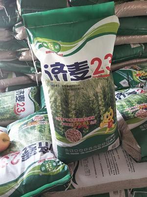 山东省济宁市鱼台县小麦种子