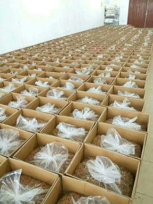 广西壮族自治区玉林市博白县博白桂圆肉 箱装 一等 桂圆肉
