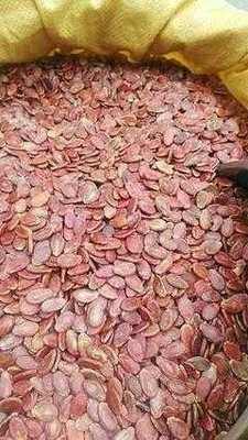 新疆维吾尔自治区塔城地区塔城市紫荆红瓜子 散装