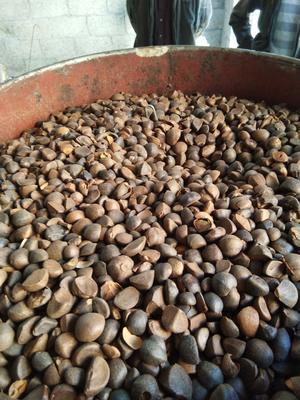 广西壮族自治区河池市凤山县现榨山茶油