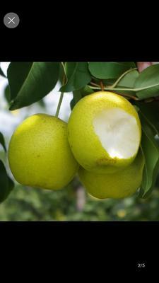 这是一张关于酥梨 75mm以上 150-200g的产品图片