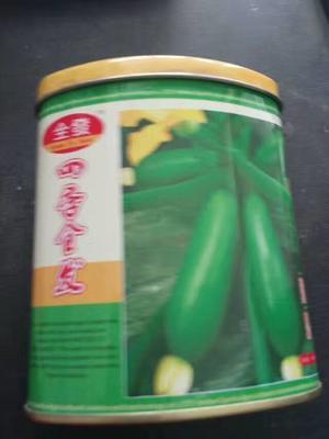 河南省新乡市原阳县金珠西葫芦种子