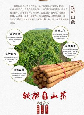广东省潮州市湘桥区铁棍山药 90cm以上