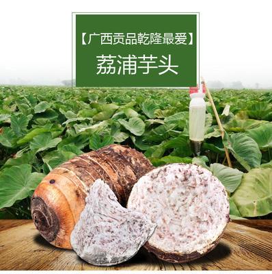 广东省潮州市湘桥区荔浦芋头 6cm以上